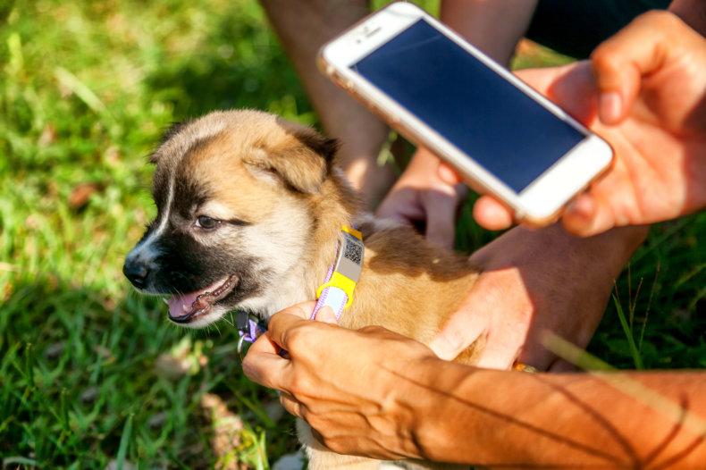 Pets innovations: Innovación en el sector de las mascotas -